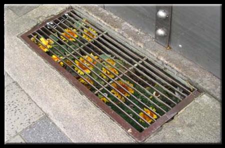 Guerilla Gardening - Subverting Urban Ecologies