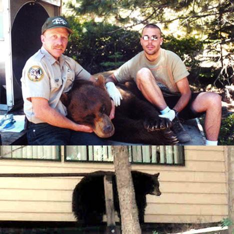 Urban Bear Capture