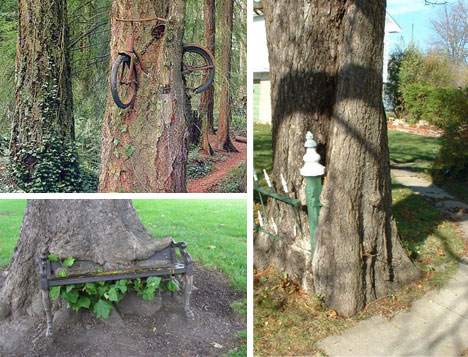Trees Overgrowing Objects