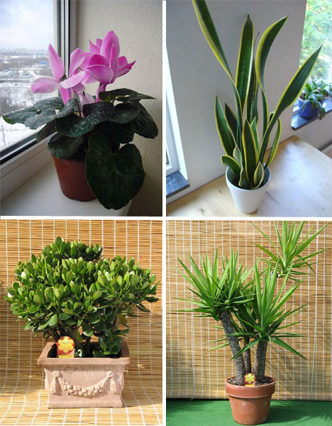 Unusual Urban Planting 5 Different Types Of Gardening: weird plants to grow indoors