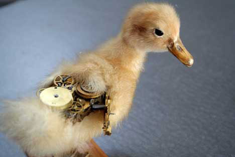 steampunk taxidermy