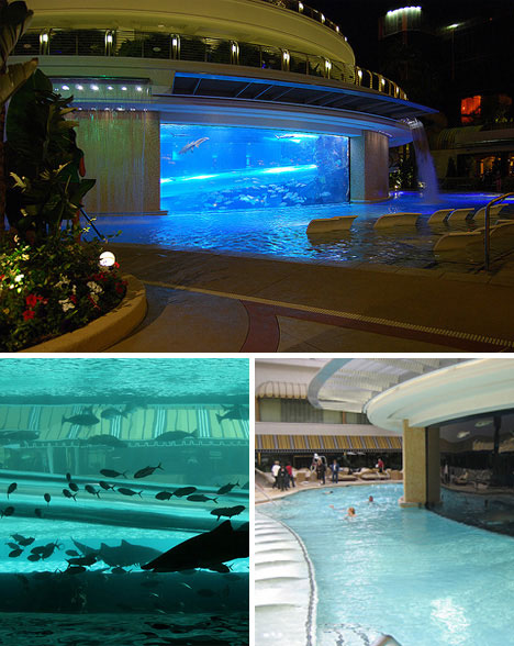 luxurious swimming pools golden nugget shark tank pool