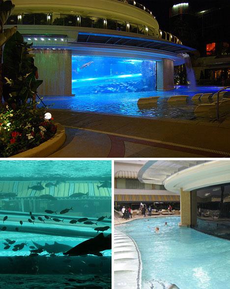 luxurious swimming pools golden nugget shark tank pool