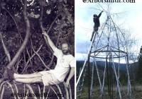 Tree Furniture Designs Buildings