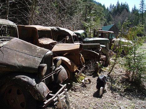 Abandoned Truck Photo