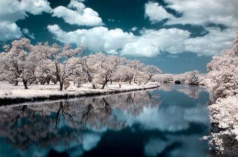naomi frost infrared photography