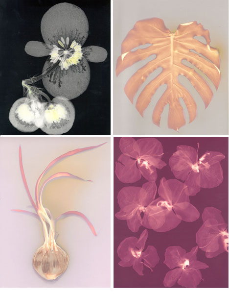 angela easterling photograms