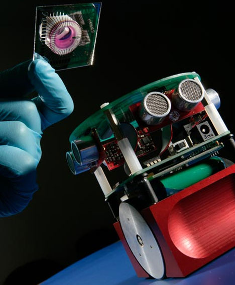 rat brain robot