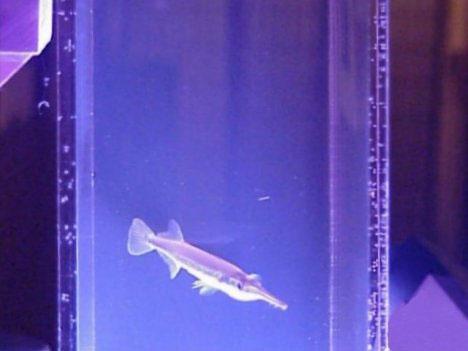 7 Amazing Aquariums And Fish Tank Designs Systems Urbanist