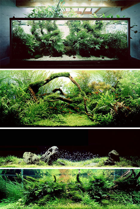 7 amazing aquariums and fish tank designs systems urbanist for Fish tank design