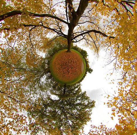 orange-fall-tree-leaves