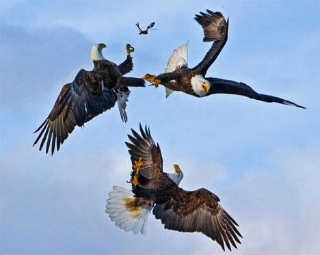 three-eagles