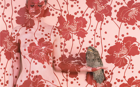 Emma Hack Wallpaper Tawny Frogmouth