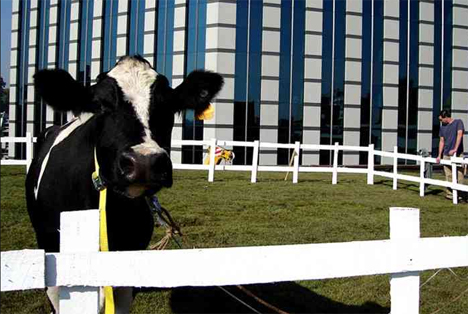 The Cow Santiago Chile