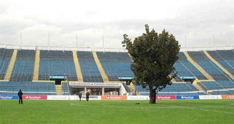 The Tree Santiago Chile