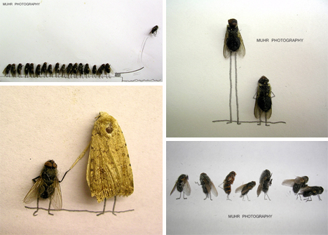 magnus muhr dead fly photography 2