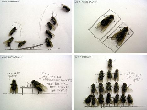 magnus muhr dead fly photography 3