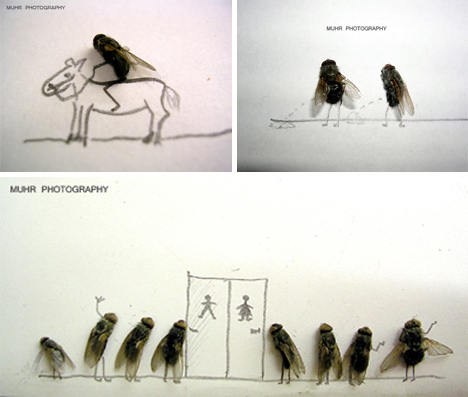 magnus muhr dead fly photography 4