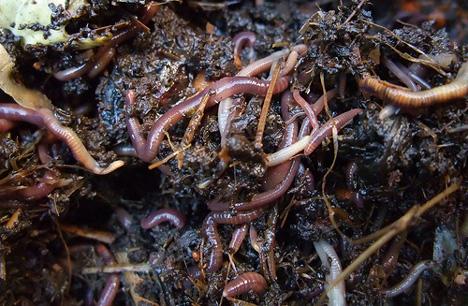 worm-picker