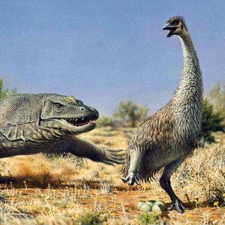 Weird Animals That Went Extinct 11