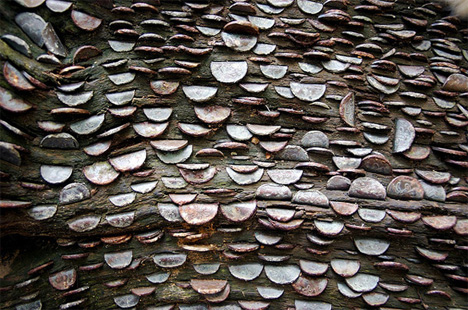 Marvelous Mystery of Britain's Money Trees