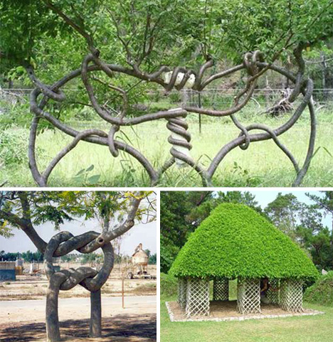 Carefully Shaped And Pruned To Be Gorgeous Microcosms Of Nature, They Are Living  Art.