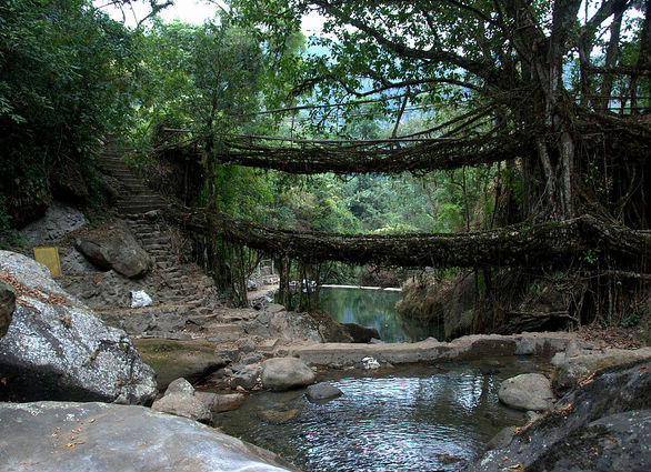 Living Infrastructure: Grow it Yourself Jungle Bridges
