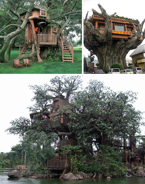 A real tree house is either a real house built in a tree, or a fantastical  feat perched high in the tree tops. These gigantic and beautiful tree houses  ...