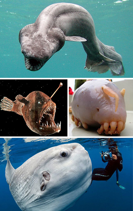 Scary Animals That Are Real Scary Seas: 21 ...