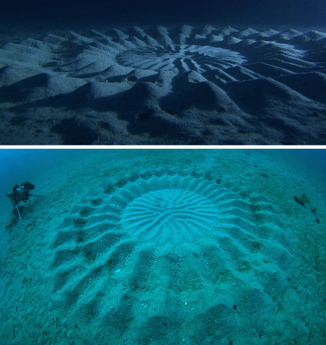 "mystery of under water crop circles essay The intricate patterns are beautiful, but these gorgeous surprises also serve a purpose underwater photographer yoji ookata has spent 50 years exploring the ocean depths, but he was still surprised by the sight of massive underwater patterns resembling the crop circles still surprised him the ""mystery circle"" as he called it was more than."