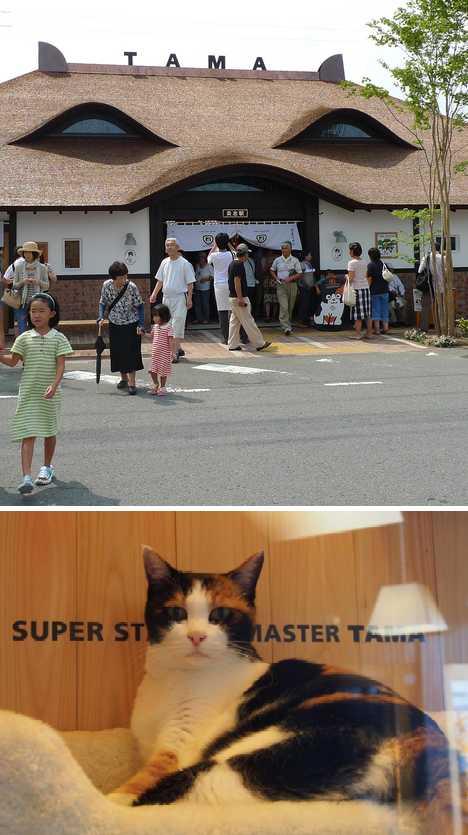 Tama Cat Kishi Station Japan