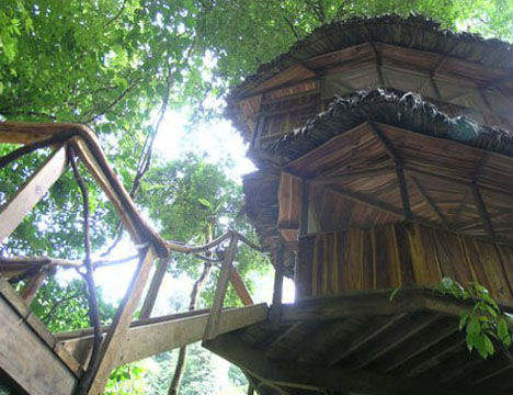 Treehouses Romero 1