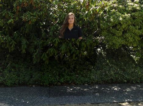 invisibility cloak tree background