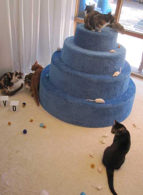 DEVO Cat Listening Party