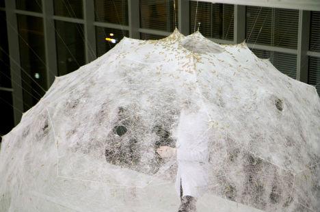 Silk Worm Pavilion 2