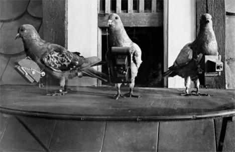 Unusual Cameras Pigeon Surveillance