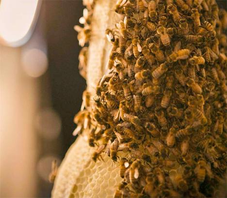 3B Printing Whiskey Bottle Bees 3