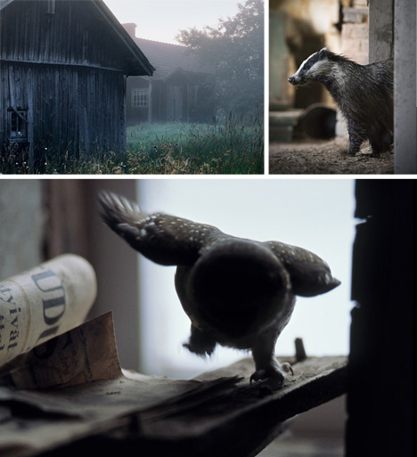 abandoned home animal portraits