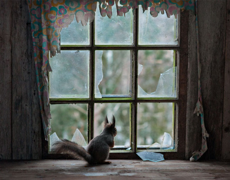 abandoned window sill squirrel