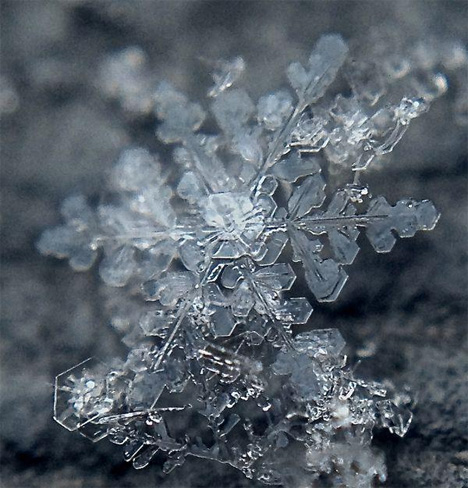 extreme close up of snowflake