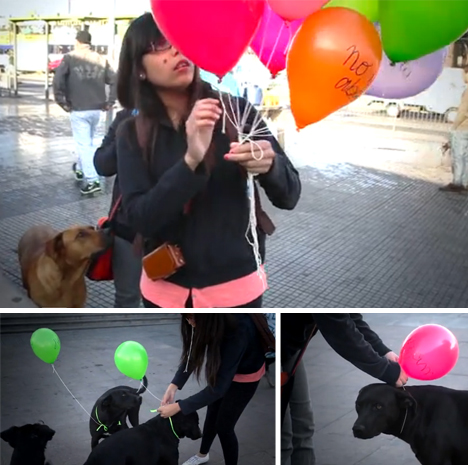 homeless dog urban intervention