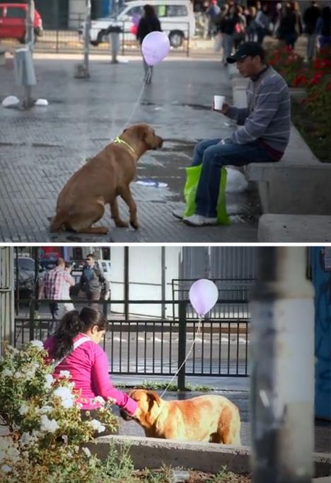 homeless dogs human interest