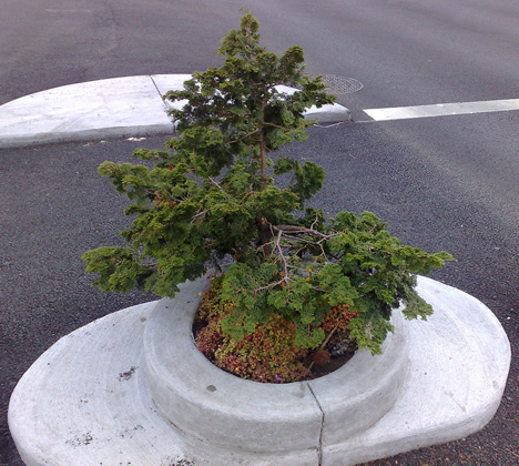 micro tree portland oregon