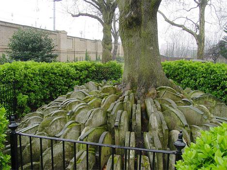 Crazy Cemeteries Hardy Tree
