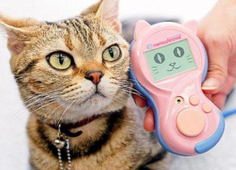 Pet Tech Meowlingual