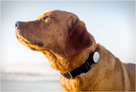 Pet Tech Whistle Dog Monitor