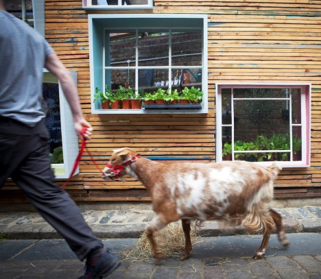 pop up urban farming