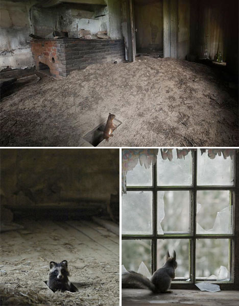 Abandoned Scandinavia Animal House 2