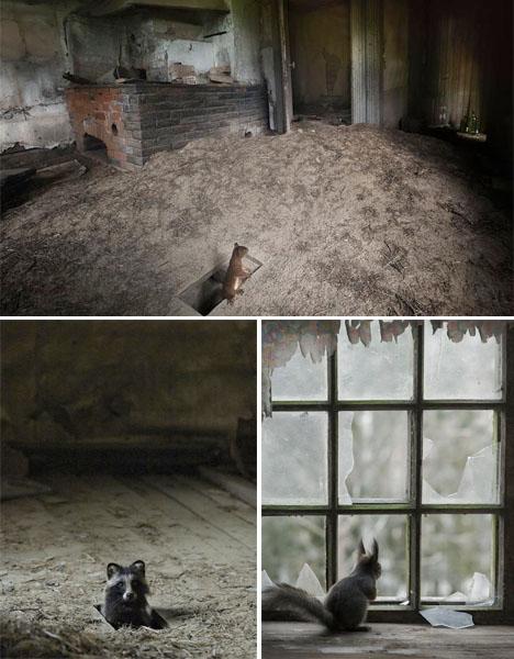 Abandoned Scandinavia Animal House 2