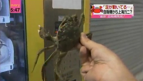 Weird Vending Machines Live Crabs